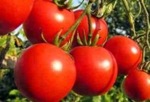 See 7 Juicy Reasons To Eat Tomatoes Today